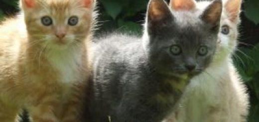 Kot w domu a dziecko